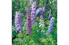 DELPHINIUM DWARF MAGIC FOUNTAIN MIX SEEDS - MIXED COLOURS - 50 SEEDS