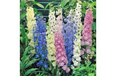 DELPHINIUM CROWN PACIFIC MIX SEEDS - MIXED COLOUR FLOWERS - 100 SEEDS