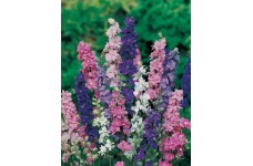 DELPHINIUM LARKSPUR GIANT IMPERIAL CROWN BLENDED MIX SEEDS - 400 SEEDS